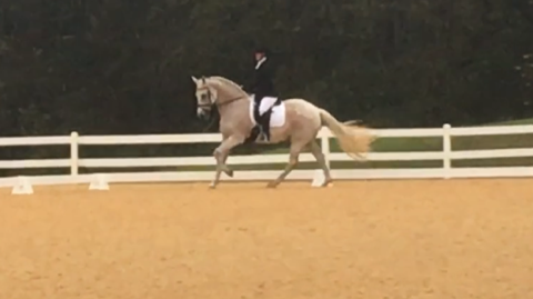 My new favorite exercise – training level dressage