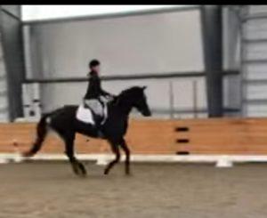 working equitation novice level dressage test
