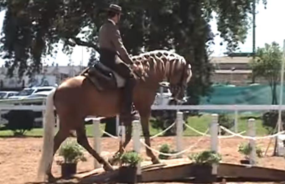 working equitation training on the bridge