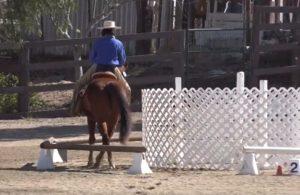 Round pen working equitation